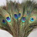 Peacock Mor Pankh Feather Tails In Full Length (PACK OF 10)